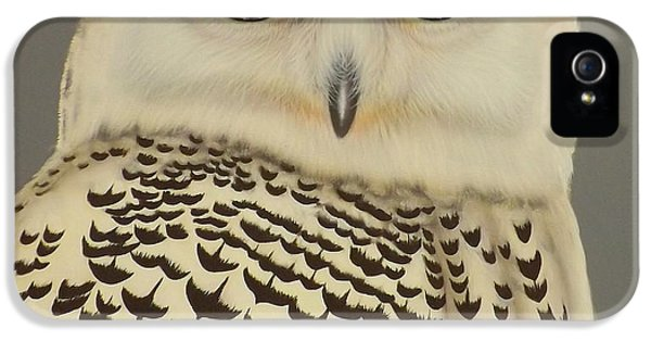 Birds Of A Feather IPhone 5 / 5s Case by Darren Robinson