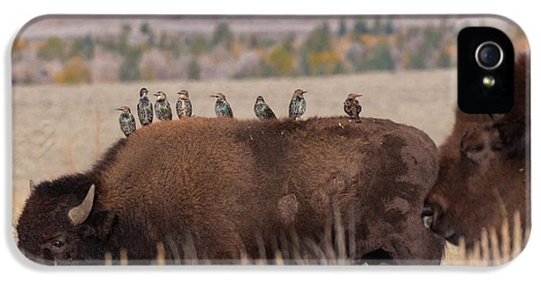Bison And Buddies IPhone 5 Case