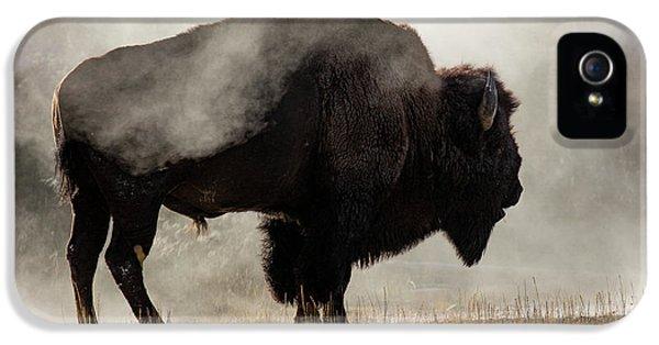 Buffalo iPhone 5 Case - Bison In Mist, Upper Geyser Basin by Adam Jones
