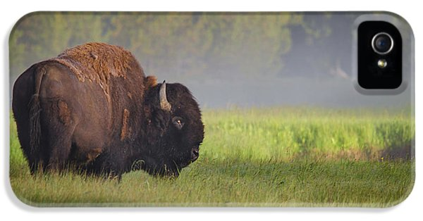Bison In Morning Light IPhone 5 Case