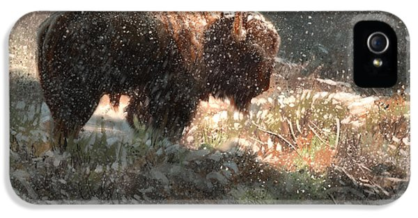 Bison In The Snow IPhone 5 Case by Aaron Blaise