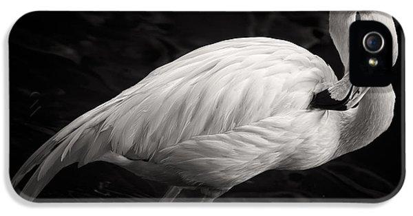 Flamingo iPhone 5 Case - Black And White Flamingo by Adam Romanowicz