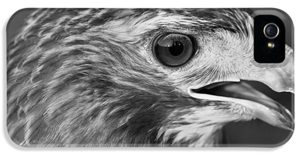 Black And White Hawk Portrait IPhone 5 Case by Dan Sproul