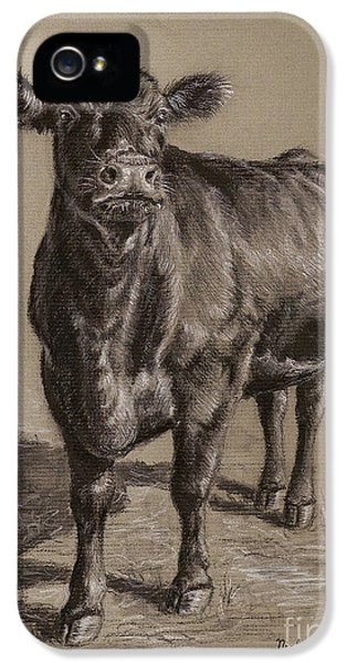 Cow iPhone 5 Case - Black Angus Cow 1 by Nicole Troup