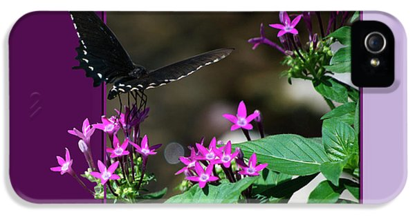 Black Butterfly IPhone 5 Case