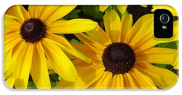 Black Eyed Susans IPhone 5 / 5s Case by Suzanne Gaff