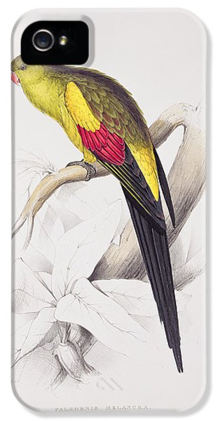 Black Tailed Parakeet IPhone 5 / 5s Case by Edward Lear