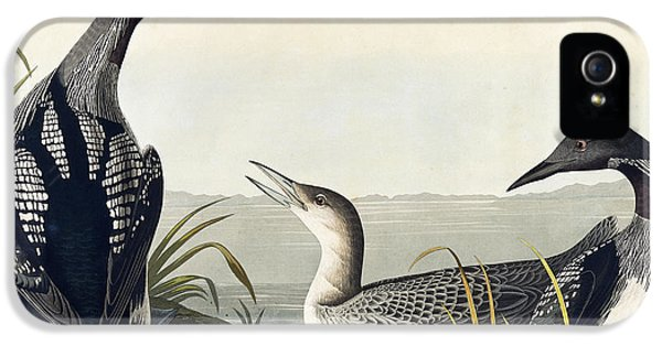 Black Throated Diver  IPhone 5 / 5s Case by John James Audubon