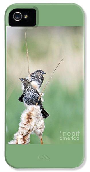 Blackbird Pair IPhone 5 Case