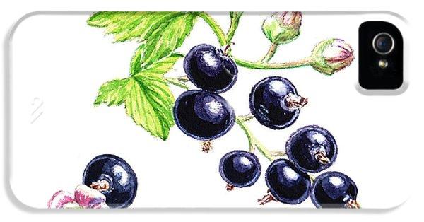 IPhone 5 Case featuring the painting Blackcurrant Botanical Study by Irina Sztukowski