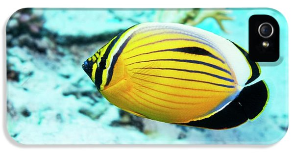 Blacktail Butterflyfish IPhone 5 Case by Georgette Douwma