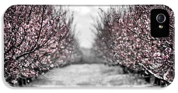 Blooming Peach Orchard IPhone 5 Case by Elena Elisseeva