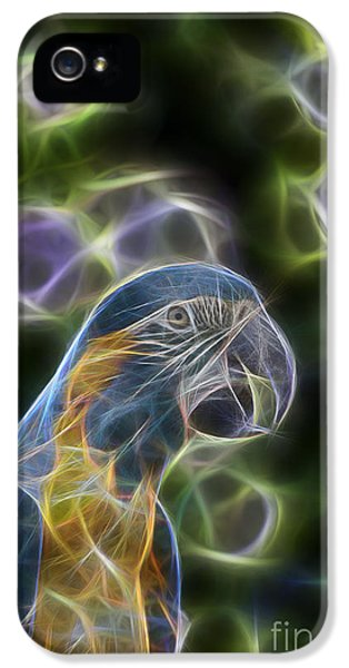 Blue And Gold Macaw  IPhone 5 Case by Douglas Barnard