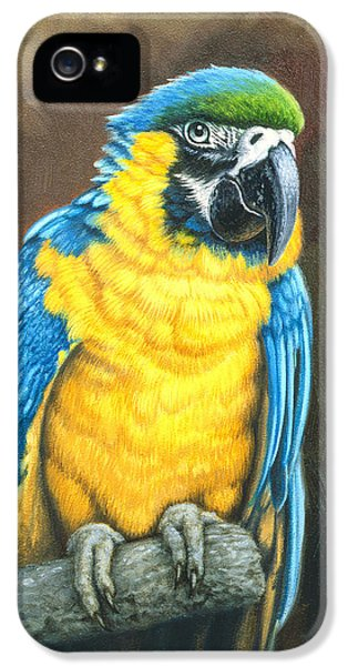 Macaw iPhone 5 Case - Blue And Gold Macaw by Paul Krapf