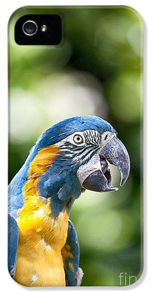 Blue And Gold Macaw V2 IPhone 5 Case by Douglas Barnard