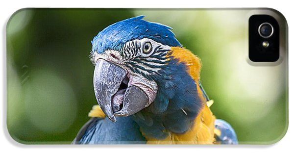 Blue And Gold Macaw V3 IPhone 5 Case by Douglas Barnard
