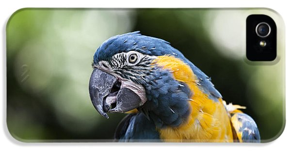 Blue And Gold Macaw V5 IPhone 5 Case by Douglas Barnard