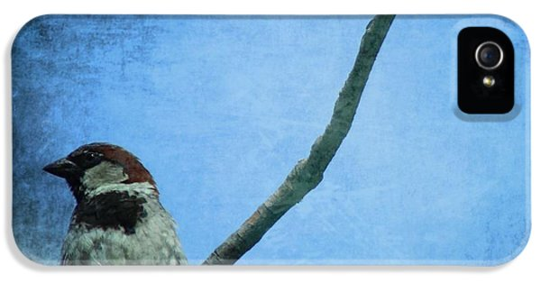Sparrow On Blue IPhone 5 Case by Dan Sproul