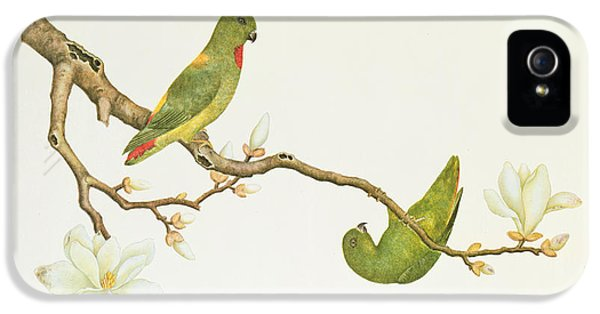 Parakeet iPhone 5 Case - Blue Crowned Parakeet Hannging On A Magnolia Branch by Chinese School