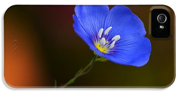 Blue Flax Blossom IPhone 5 Case