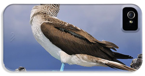 Blue-footed Booby IPhone 5 Case by Tony Beck