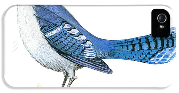 Blue Jay  IPhone 5 / 5s Case by Anonymous