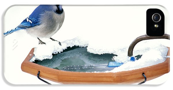 Blue Jay At Heated Birdbath IPhone 5 / 5s Case by Steve and Dave Maslowski