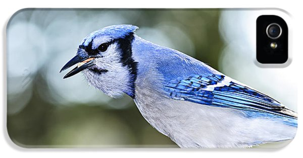Blue Jay Bird IPhone 5 / 5s Case by Elena Elisseeva