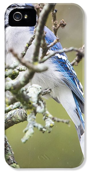 Blue Jay In The Rain IPhone 5 Case
