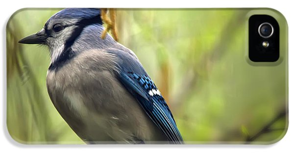 Blue Jay On A Misty Spring Day IPhone 5 / 5s Case by Lois Bryan