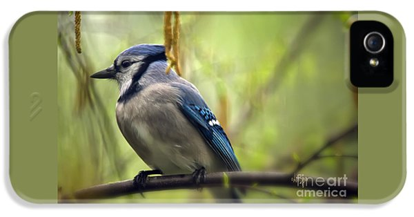 Blue Jay On A Misty Spring Day IPhone 5 Case by Lois Bryan
