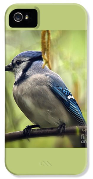 Blue Jay On A Misty Spring Day - Square Format IPhone 5 / 5s Case by Lois Bryan