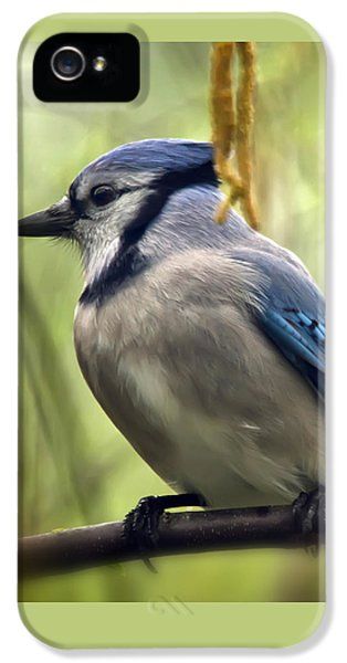 Blue Jay On A Misty Spring Day - Square Format IPhone 5 Case by Lois Bryan