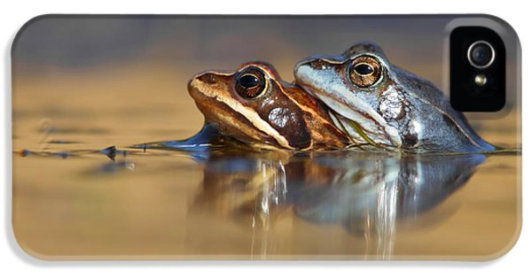 Amphibians iPhone 5 Case - Blue Love ... Mating Moor Frogs  by Roeselien Raimond