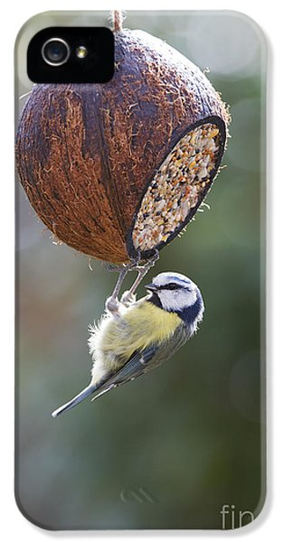 Titmouse iPhone 5 Case - Blue Tit Feeding by Tim Gainey