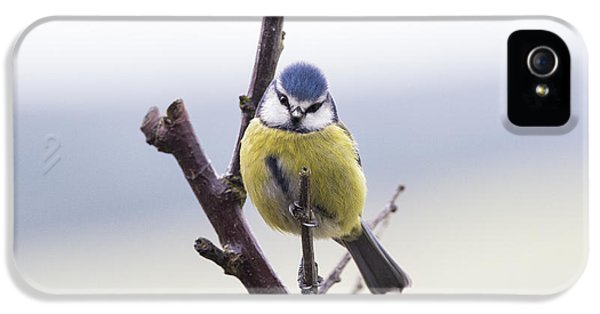 Titmouse iPhone 5 Case - Blue Tit by Tim Gainey