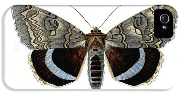 Blue Underwing Moth IPhone 5 Case by Collection Abecasis