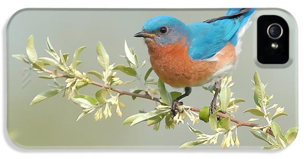 Bluebird Floral IPhone 5 Case by William Jobes