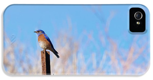Bluebird On A Post IPhone 5 Case