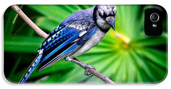 Thoughtful Bluejay IPhone 5 / 5s Case by Mark Andrew Thomas