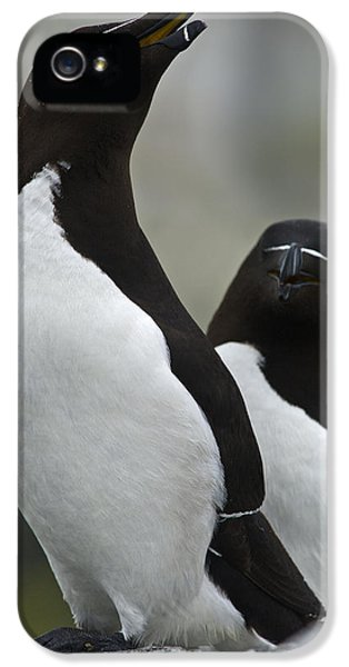 Bonded For Life... IPhone 5 Case