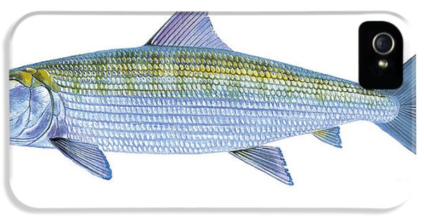 Drum iPhone 5 Case - Bonefish by Carey Chen
