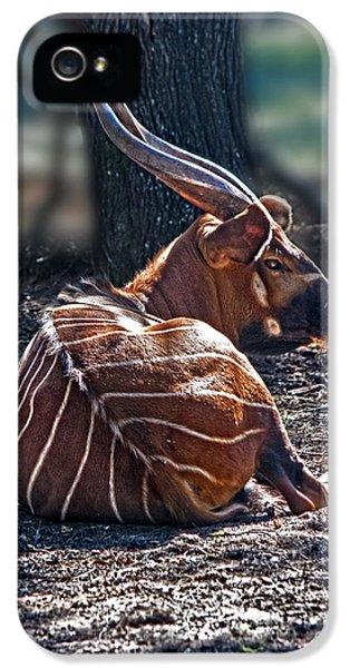Bongo IPhone 5 Case