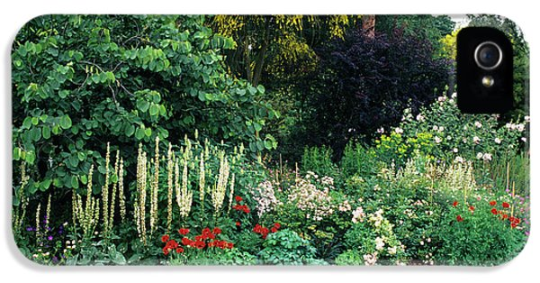 Etna iPhone 5 Case - Border At A Garden by Duncan Smith/science Photo Library