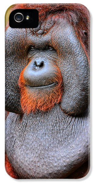 Bornean Orangutan Iv IPhone 5 Case by Lourry Legarde