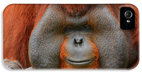 Bornean Orangutan IPhone 5 Case by Lourry Legarde