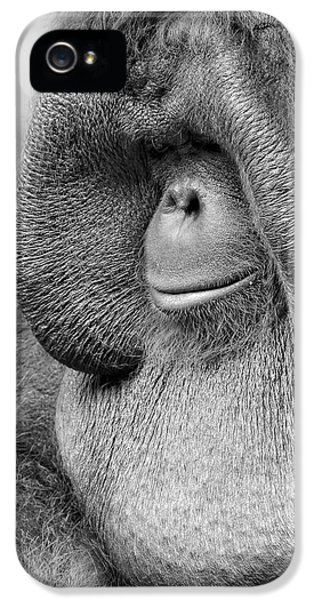 Bornean Orangutan V IPhone 5 Case by Lourry Legarde