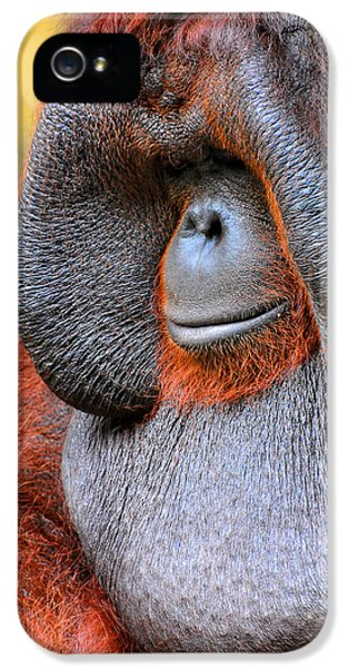 Bornean Orangutan Vi IPhone 5 Case by Lourry Legarde