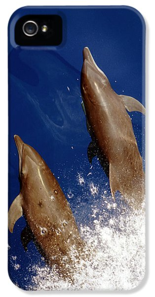 Bottlenose Dolphins Tursiops Truncatus IPhone 5 / 5s Case by Anonymous
