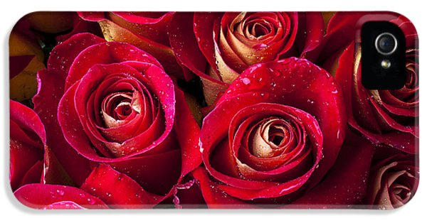 Boutique Roses IPhone 5 Case by Garry Gay